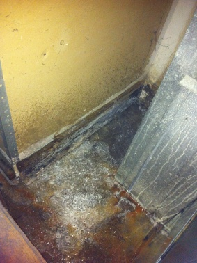 Mold Following a Flood