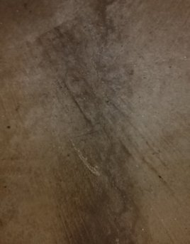 Mold on concrete garage floor