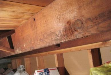 Black mold in attic