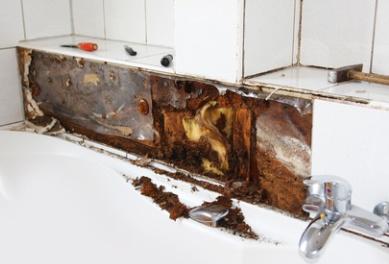Black mold in bathroom behind tiles