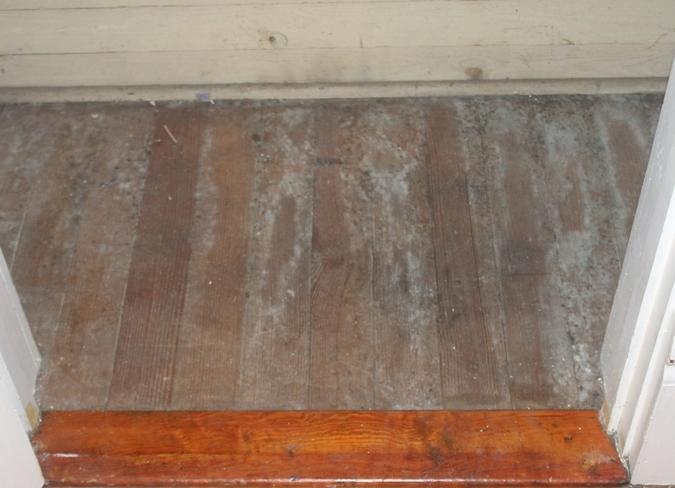 wood flooring mold problems