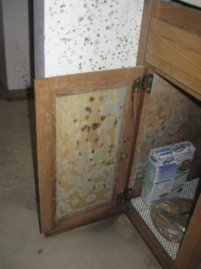 Aspergillus mold in kitchen