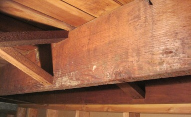 Mold In Basement & Removing Mold in Basement ..........Steps Cleaners to Use Prevention