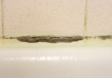 bathroom grout with mold
