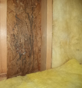 What is black mold health concerns finding mold for Mold resistant insulation