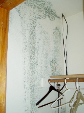 mold from ceiling water leak