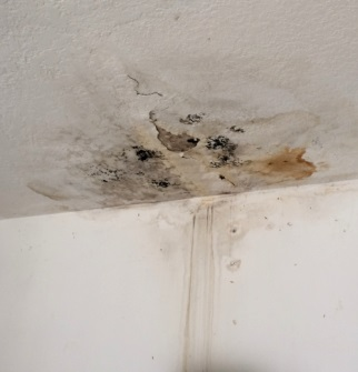 Ceiling Water Leak With Mold