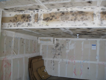 Can I Paint Over Mold On Ceiling