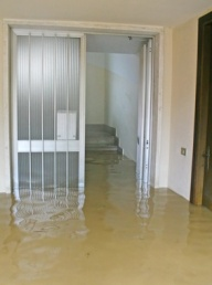 Homeowners insurance mold coverage