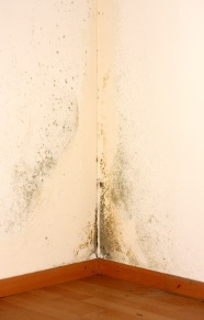 Mold from excessive house humidity