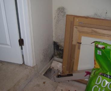 mold on basement walls and floor