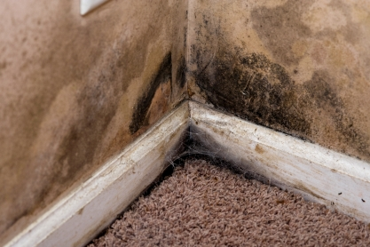 Mold On Carpet And Walls