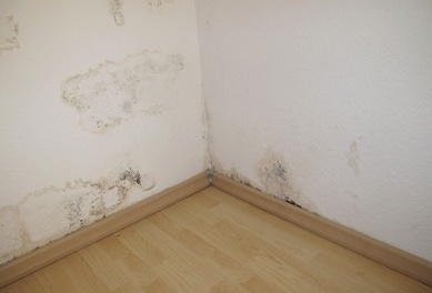 Mold in corner of walls