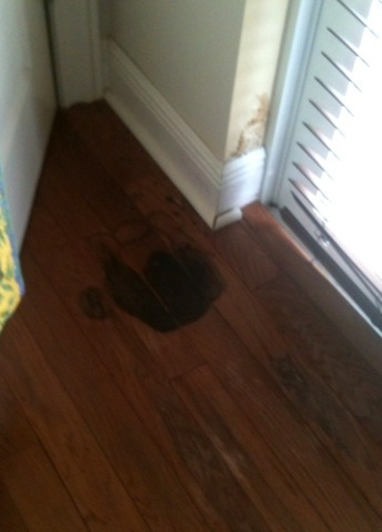 mold on hardwood flooring