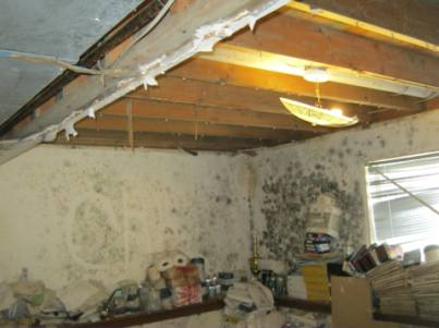 mold in basement removal images