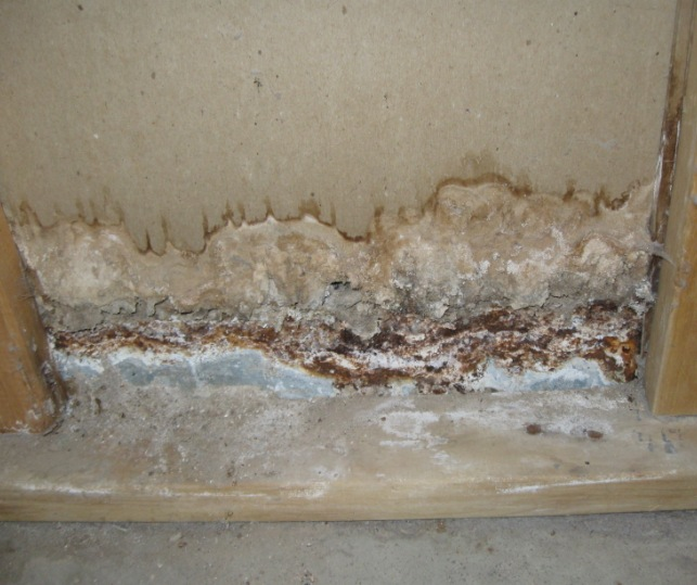 mistakes homeowners make removing mold themselves