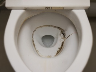 mold in toilet