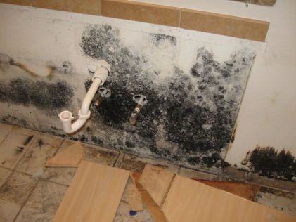 Mold on Kitchen Wall