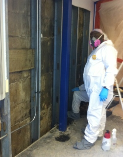 Mold Remediation Company Mistakes