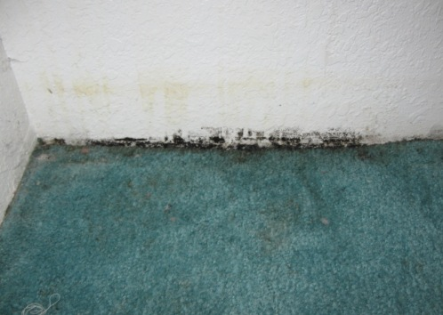 Mold on Wall and Carpets