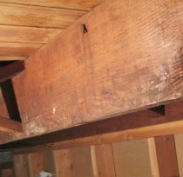 Mold in unfinished basement