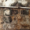 pictures of black mold - Exposure To Black Mold