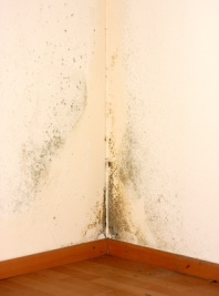 What Is Mold Why Is It Dangerous To Have In Your Home