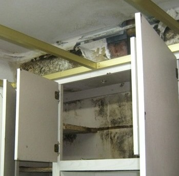 Mold behind kitchen cabinets