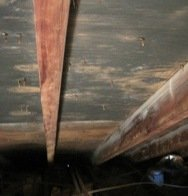 Aspergillus mold in attic
