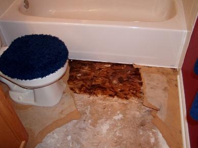 bathroom mold under vinyl flooring