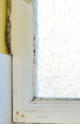 Mold on Porous Surface - Drywall and Wood