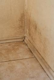 What To Do If You Find Mold In Your Home