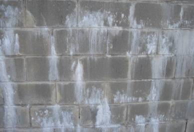 Efflorescence Vs Mold