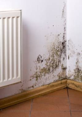 Eye Issues From Household Mold Exposure
