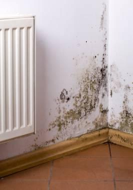 Household Mold Exposure