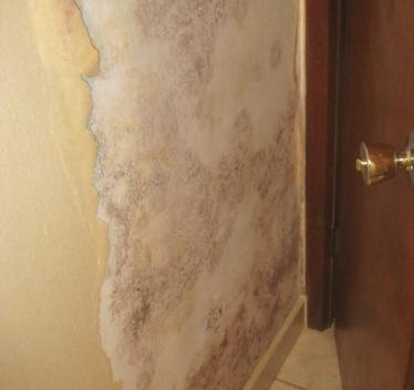 mold under wallpaper