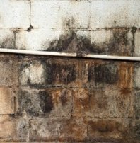 Mold on concrete wall