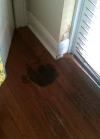 Wood Flooring Mold Problems Dealing