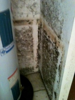 Mold from hot water heater leak