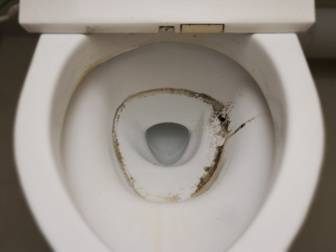 Excellent Cleaning Mold In Toilet Bowl Tank Rim Seat And Lid Download Free Architecture Designs Osuribritishbridgeorg