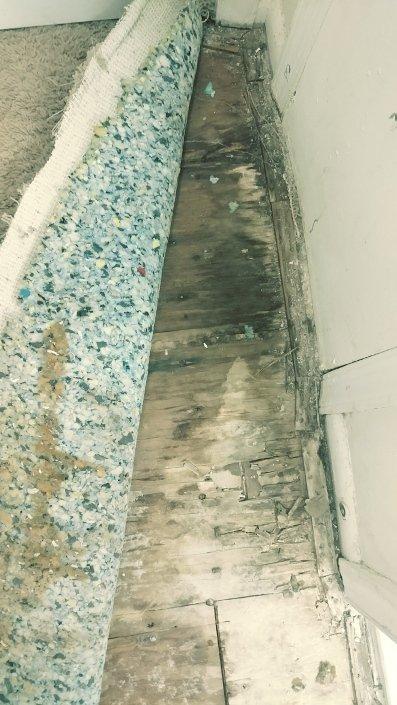 subfloor mold under carpet
