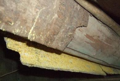 Yellow Mold in the Home